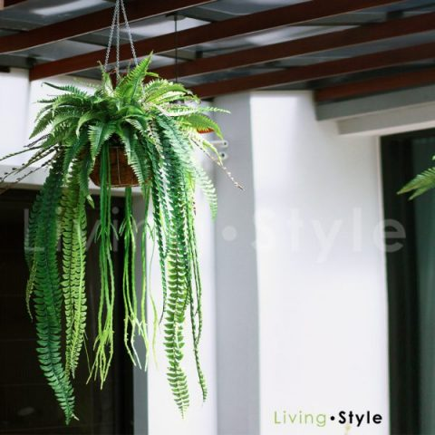 HGM0001 / Hanging baskets with Ferns