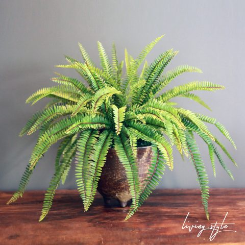 PBM0010 / Fern Potted