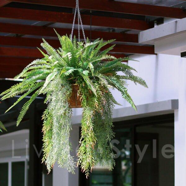 Ornamental plants 03