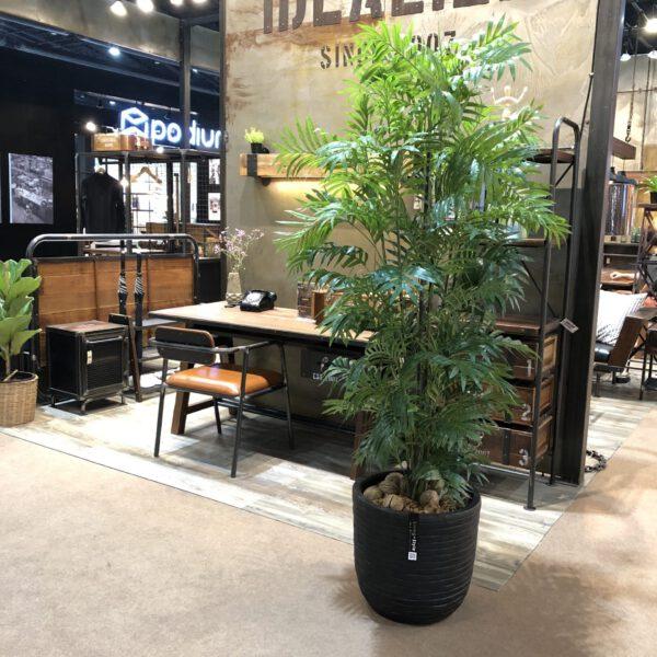 Bamboo Plam / ปาล์มไผ่