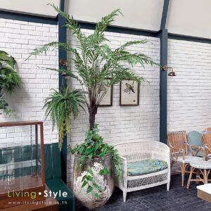 Roebelenii Palm / ต้นปาล์มสิบสองปันนา