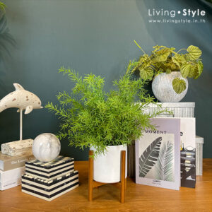 PPS0001 Foxtail Fern with Ceramic Pot White
