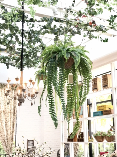 fern hanging