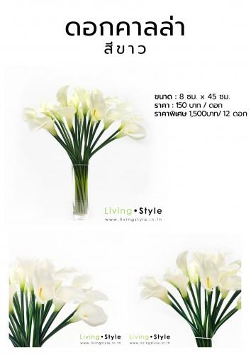 C ดอกคาลล่า สีขาว
