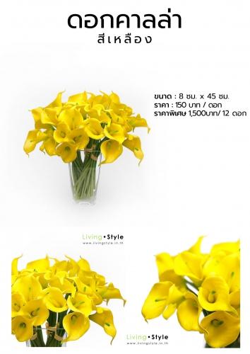 C ดอกคาลล่า สีเหลือง