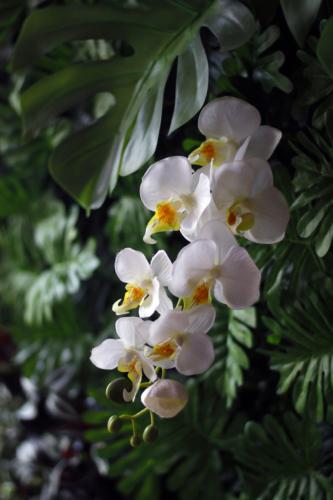 Vertical Garden Ubon